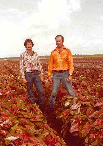 Paul and Danny Phypers Happiness Farms Caladiums